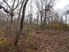 日, 2011-11-27 13:21 - Forest Park
