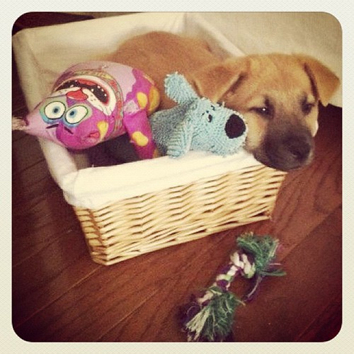 Happiness is a Toy Basket