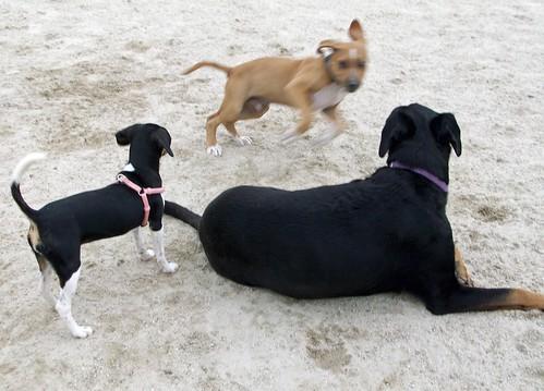 DogPark_LolaRosie_82111d