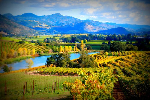 california travel us vineyard wine winery winetasting napavalley napa grapevine quintessawinery rutherfordcalifornia