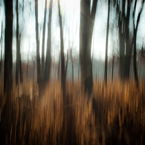 trees winter abstract motion blur forest square movement woods nikon icm hellernaturecenter d5000 intentionalcameramovement noahbw