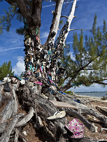 Shoe Tree by Michael Orhelein