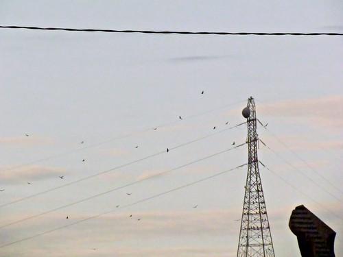 sunset summer birds twilight iowa powerlines ia dubuque