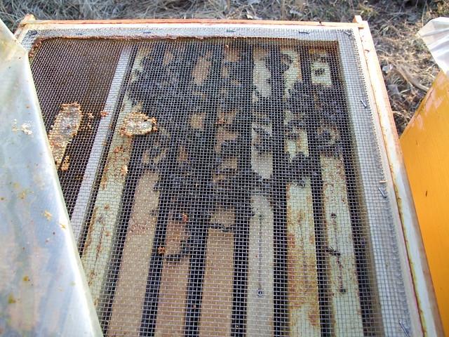 cuib de iernare la 12 grade c(la umbra)
