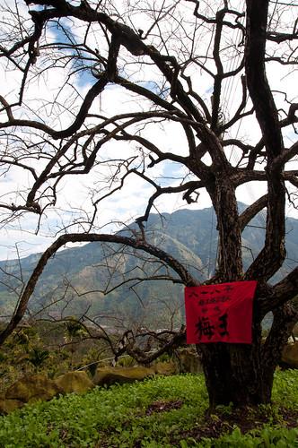 Fengguidou 1/1/2012