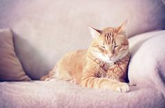 [フリー画像素材] 動物 1, 猫・ネコ, 寝顔・寝姿 ID:201201141000