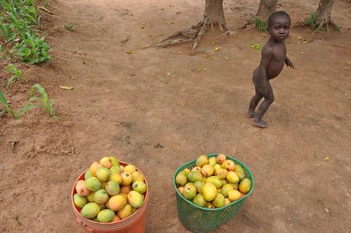 Young mango seller