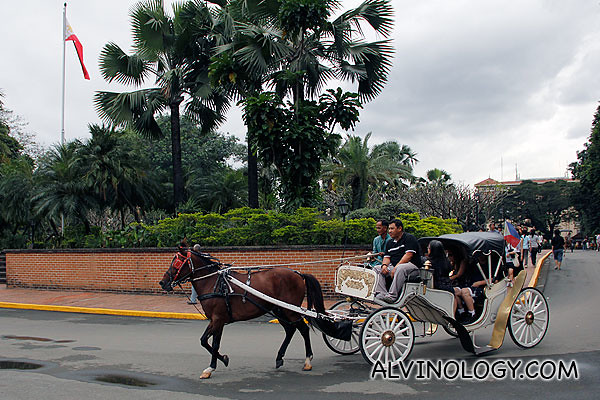 Horse carriages for hire