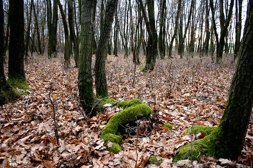 Gallbrunner Wald