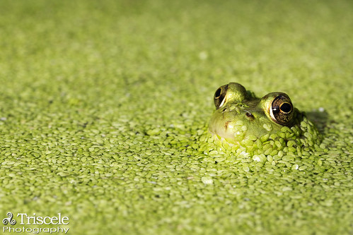 house green college ma northampton massachusetts amphibian smith frog lyman colorphotoaward blinkagain bestofblinkwinners