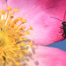 Flower and bug by Marcello Bardi
