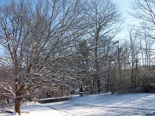 Snow_12012b