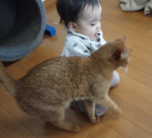 ネコのお手伝い