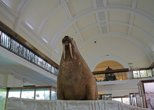 Stuffed walrus