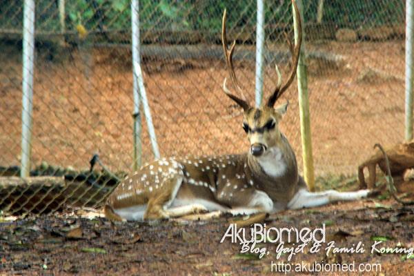 Rusa di Zoo Melaka