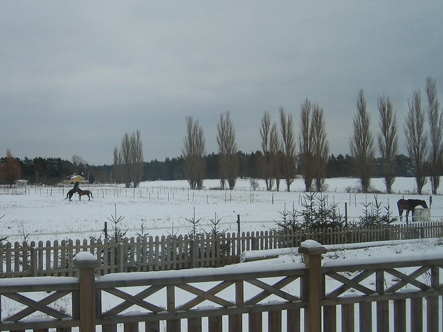 Viking Land, Horse, Winter 008
