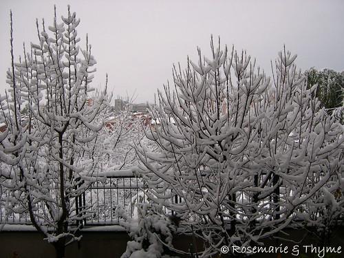 DSCN9214 - neve a Roma 2012