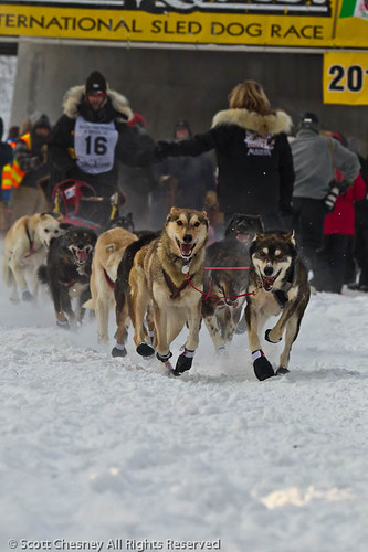 Yukon Quest Start 2012 (copyright Yukon Quest)