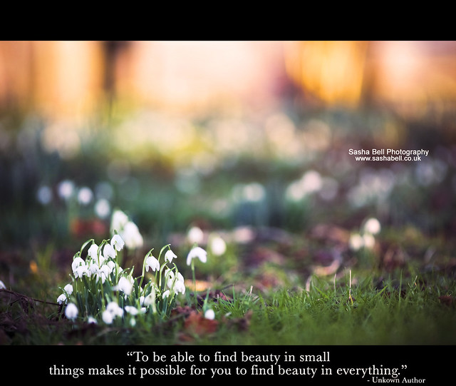 """To be able to find beauty in small things makes it possible for you to find beauty in everything"""