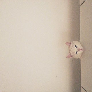Observation point: on top of kitchen cabinet. #cat #white #kitchen  #vscocam