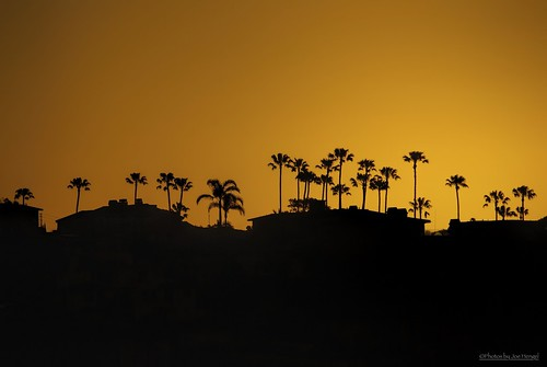 california ca trees houses orange sunlight black tree silhouette yellow sunrise pier san silhouettes palm palmtrees socal palmtree half split southerncalifornia orangecounty oc theoc clemente