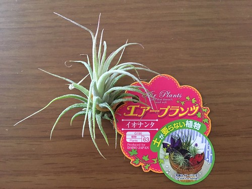 AirPlants (2)