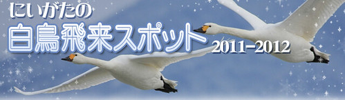 新潟の白鳥の飛来スポット/新潟県公式観光情報サイト にいがた観光ナビ
