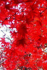 Autumn Color for iPhone
