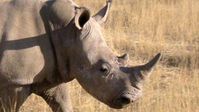 rhino2 by bucklesw1