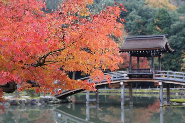 Autumn leaves at Eiho Temple in Gifu Japan. 虎渓山永保寺の紅葉