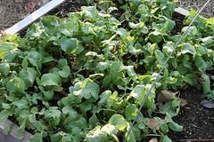 winter gardens 027