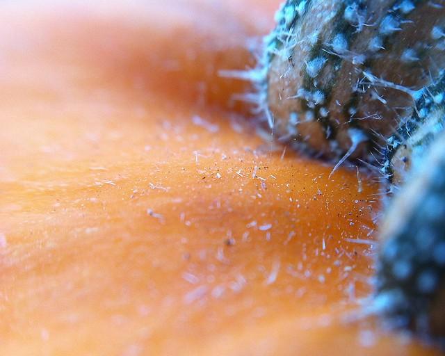 337/365 Planet Pumpkin