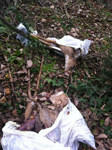 hunters ditched deer parts on northbank trail