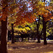 秋色コラボレーション