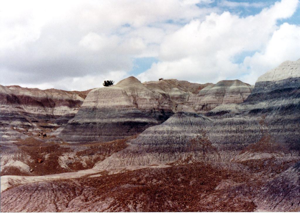 1990, Tree, Painted Desert, Arizona