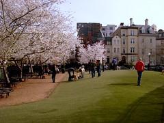 park near Dupont Circle, Washington DC (by: Micharl Feagans, creative commons license)
