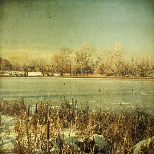 trees winter light lake snow canon square frozen colorado afternoon grunge cattails shore textured frommyfrontdoor t1i applesandsisters