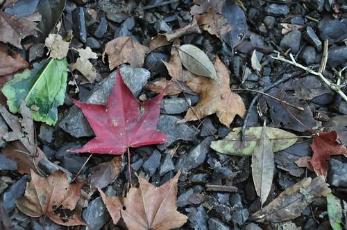 往雲森瀑布山徑上的楓紅