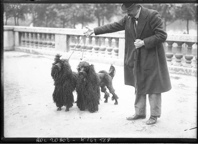 Portrait-Photo-Man-with-two-Long-hair-French-poodles-French-Photo