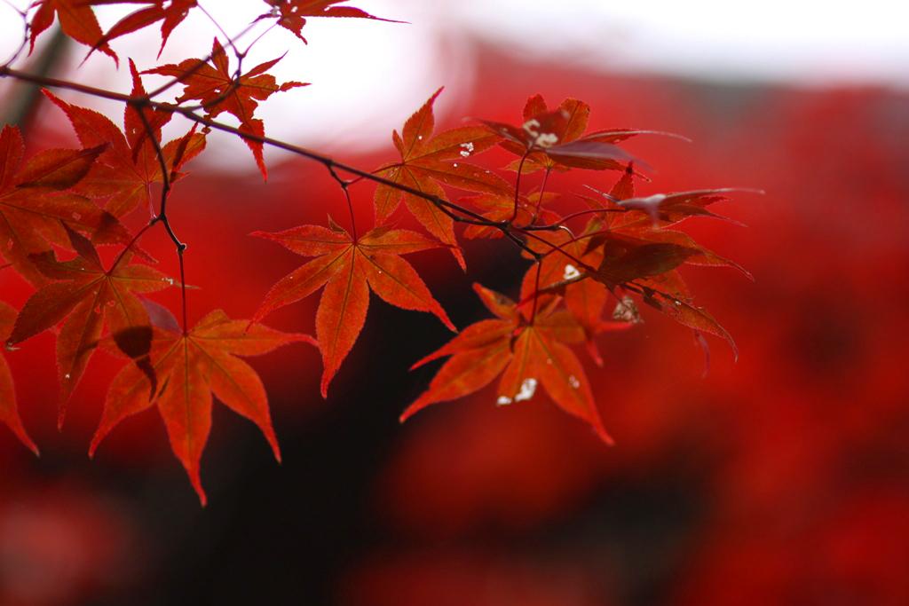 Kyoto Rakunan Guide (9)