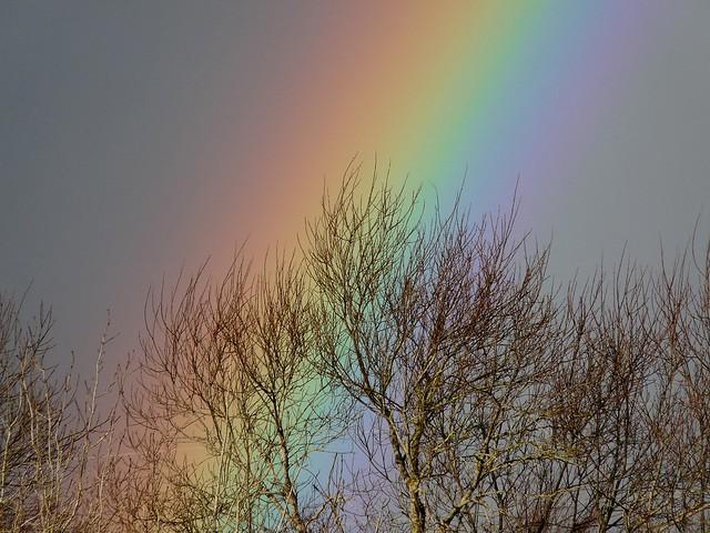 25433 - Rainbow, Llanelli WWT