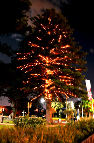 Logan Reserve Christmas Tree 01