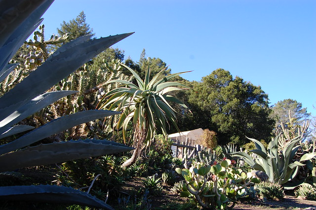 Big Sur Spirit Garden