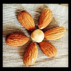 Nut flower