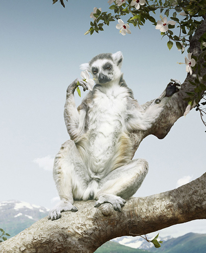"""Hello, darling"" -- photo by Simen Johan"