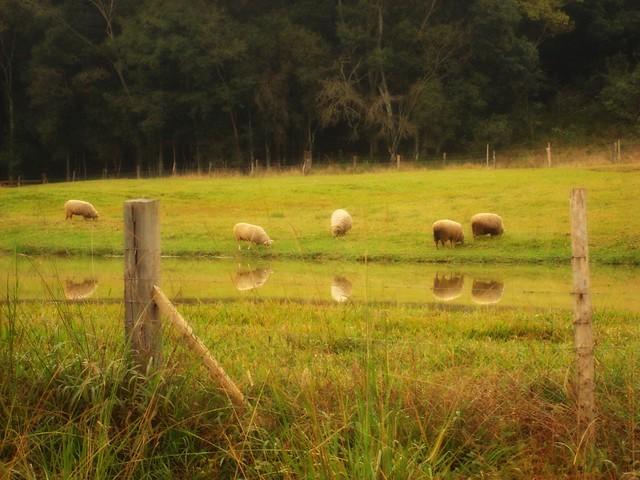 field still life