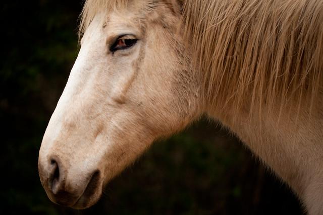 Horses 9377