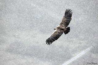 ornithologie en drome provencale 6612338255_d2a07d0070_n