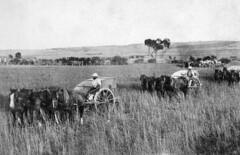 harvesters 1800s
