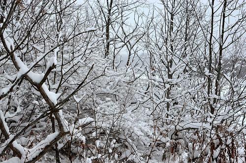 winter ski_268